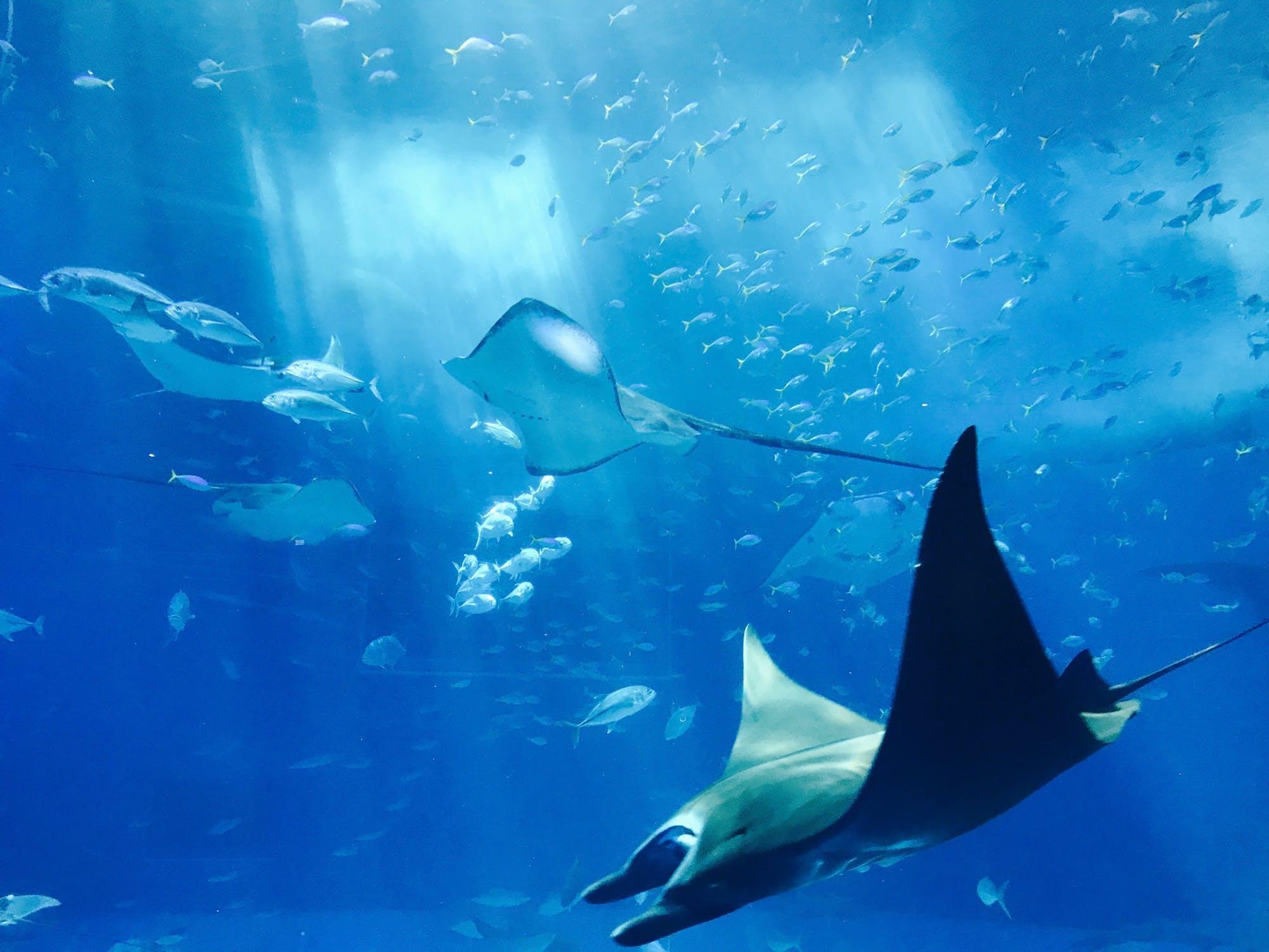 Georgia Aquarium Dive Trip